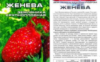 Клубника Женева: характеристика и описание сорта, выращивание и уход, фото