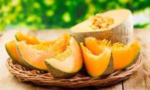 Дыня это ягода или фрукт – описание и особенности плода