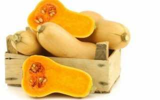 Тыква Баттернат ( описание сорта ) выращивание и уход – калорийность