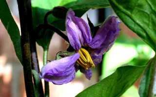 Почему опадают цветы у баклажанов причины, болезни, советы с фото