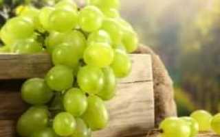 Виноград «Валентина»: описание сорта, фото, посадка и уход