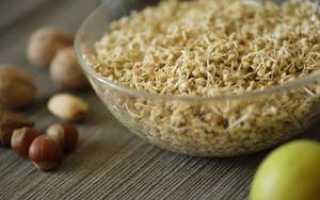 Как прорастить зелёную гречку в домашних условиях для еды, как хранить и употреблять проросшую гречку