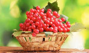 Замороженная калина: как использовать, полезные свойства, что можно приготовить из ягод, рецепты