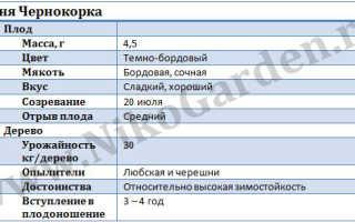 Вишня Чернокорка: описание сорта, история селекции, посадка и уход, фото