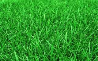 Газонная трава, которая уничтожает сорняки и медленно растёт, названия сортов, вытесняющих сорняки для дачи, как засеять газон