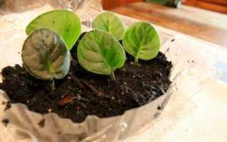 Грунт для фиалок: подходящий состав, как приготовить своими руками в домашних условиях, особенности выращивания и ухода, видео