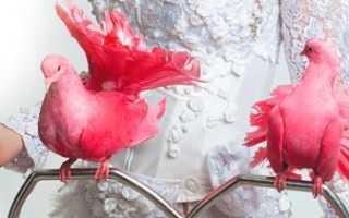 Розовый голубь: фото, описание породы, существует ли данная птица