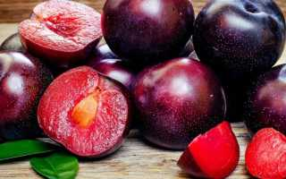 Гибрид сливы и абрикоса: характеристика и описание, лучшие сорта, особенности выращивания и ухода, фото