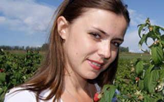 Почему жимолость садовая не цветёт или даёт мало ягод, как заставить куст плодоносить?