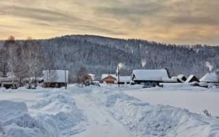 Слива в Сибири: посадка и уход, выращивание, вредители, фото
