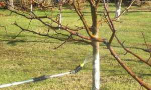 Обработка яблонь от вредителей и болезней: чем опрыскивать, в какое время года