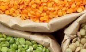 Чечевица: польза и вред, употребление при сахарном диабете 2 типа, гликемический индекс варёной чечевицы