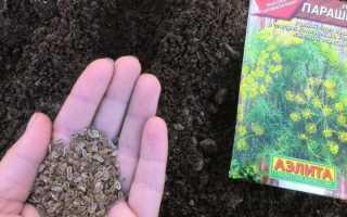 Посадка укропа осенью под зиму, сорта для открытого грунта, посев