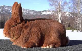 Разведение кроликов как бизнес: выгодно или нет, плюсы и минусы, составление бизнес-плана для начинающих, отзывы