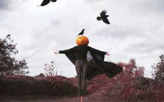 Как называется тыква на Хэллоуин: почему тыква — символ Хэллоуина, история и описание