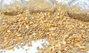 Польза и вред воздушной пшеницы: как делают в домашних условиях и на производстве, с мёдом и карамелью,