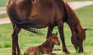 Сколько живут лошади – в домашних условиях и в дикой природе