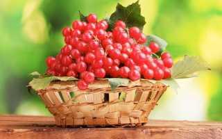 Калина красная: кора в народной медицине как лекарство при заболевании сахарным диабетом