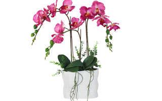 Как нарастить корни у орхидеи: основные методы и уход после наращивания, видео