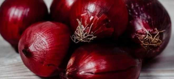 Лук Кармен: описание и характеристика сорта, посадка, уход и выращивание, фото