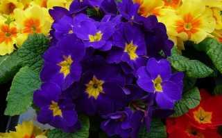 Топ-5 цветов, которые можно и нужно сеять в декабре-январе
