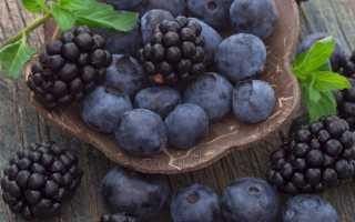 Ежевика сорта Блэк Джем: описание с фото, преимущества и недостатки, урожайность