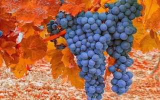 Как пересадить виноград: когда лучше это делать и в каком месяце, основные способы, видео