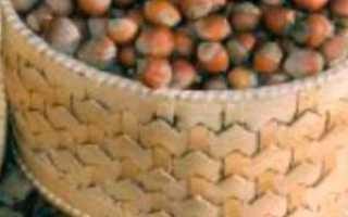 Лещина обыкновенная Фускорубра: описание растения, посадка и уход, особенности выращивания, фото