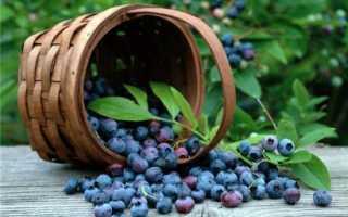 Черника при беременности: польза и вред для беременных, употребление ягоды в третьем триместре и в другие периоды