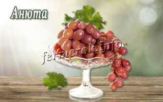 Виноград «Анюта»: описание сорта, фото, посадка и уход