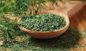 Укроп сушёный: полезные свойства и вред, особенности применения и хранения