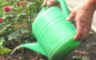 Удобрения для роз: сроки и основные правила внесения подкормок