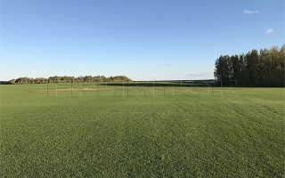Как выращивают рулонный газон: его производство и выращивание, как вырастить своими руками в домашних условиях, технология изготовления