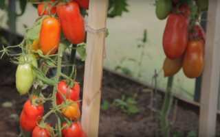 Томат «Царское искушение f1»: характеристика и описание, фото, урожайность, посадка и уход