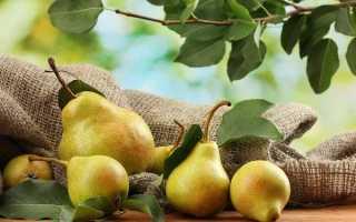 Груша колоновидная Медовая: описание и характеристика сорта, выращивание и уход, фото