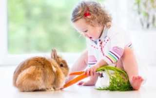 Чем можно и чем нельзя кормить кроликов в домашних условиях: какими растениям и кормами, почему нельзя кормить