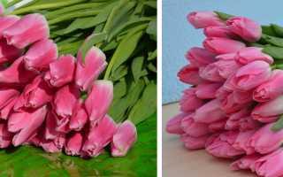 Тюльпаны Jumbo pink (Джамбо Пинк): описание и фото растения, как вырастить, использование в ландшафтном дизайне