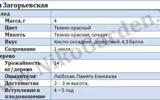 Вишня «Загорьевская»: описание и характеристика сорта, посадка и уход, фото