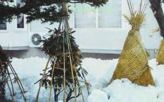 Как подготовить гортензию к зимовке в Сибири, чем и как укрывать, какие сорта не требуют укрытия