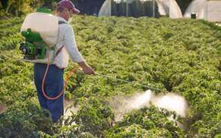 Обработка томатов зелёнкой: что даёт, сроки и основные правила обработки, полезные рекомендации