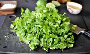 Пищевая ценность кинзы: химический состав и калорийность, витамины и микроэлементы, БЖУ