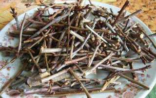 Чай из веточек вишни: польза и вред, противопоказания, характеристика, правила заваривания, особенности употребления