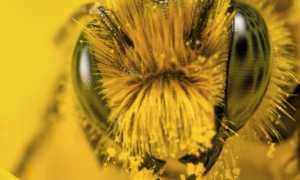 Препарат «КАС-81» для пчёл: рецепт приготовления, отзывы, как сделать самому