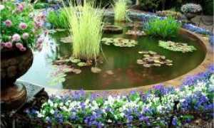 Глиняный пруд: преимущества и недостатки, как сделать своими руками и облагородить, замок из глины для пруда
