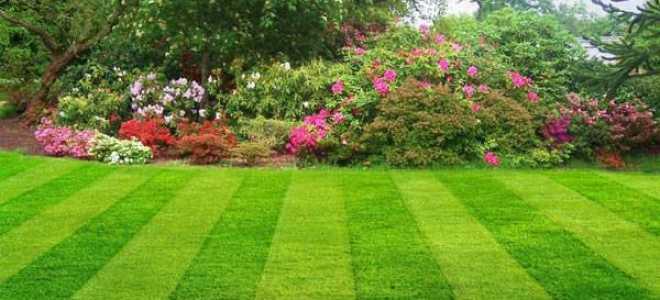 Как вывести клевер с газона: как быстро избавиться от клевера, как бороться и убрать при помощи гербицидов