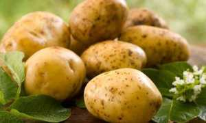 Можно ли кормить кроликов картошкой (вареной, сырой): польза и вред, особенности рациона
