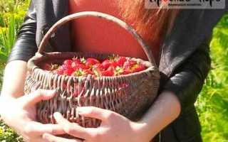 Как хранить свежую клубнику: способы, сроки, подготовка клубники к хранению
