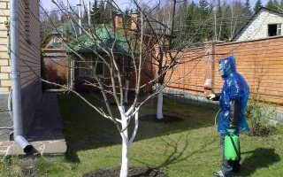 Обработка яблонь осенью от болезней и вредителей: чем опрыскать, народные средства
