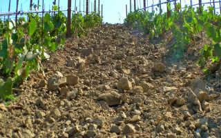 Грунт для выращивания винограда: требования к составу, кислотность