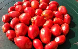 Томаты «Минусинские»: характеристика и описание сорта, фото, урожайность, выращивание